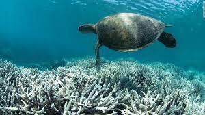 世界中のサンゴ礁1.jpg